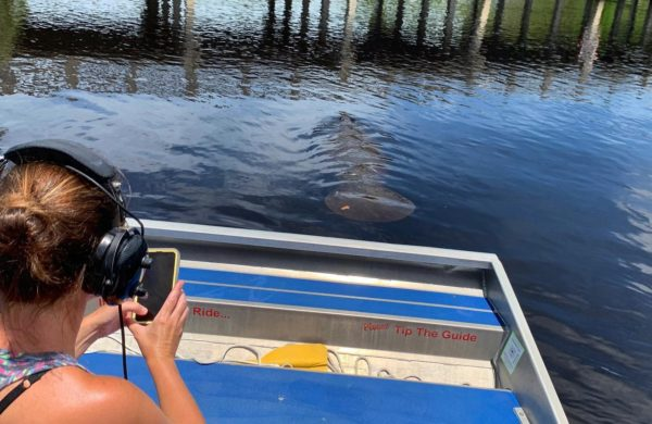 A tourist taking picture of a Florida Manatee