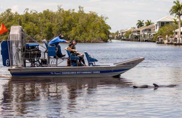 Everglades City Airboat guide pointing at Dolphins sightseeing
