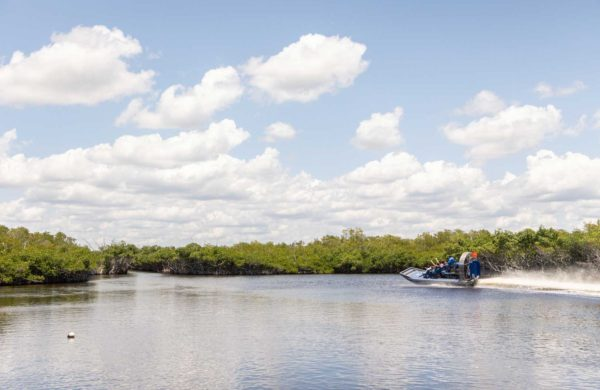 Everglades City Airboat speeding through the Florida Mangroves