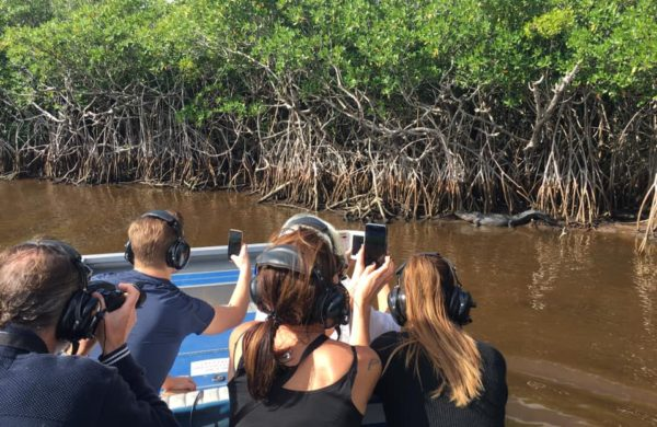 Tourists on airboat taking pictures of an alligator