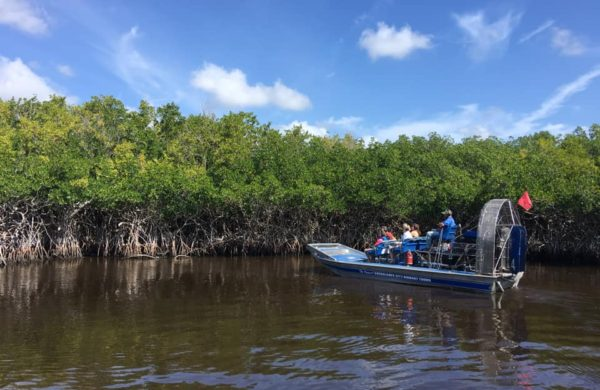 Sightseeing on Everglades City Airboat Tours