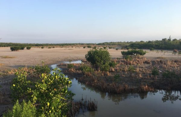 Florida Everglades wide shot