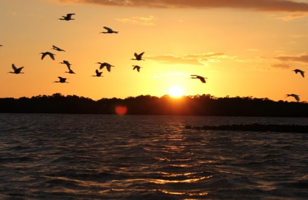 Sunset over ocean and birds flying through